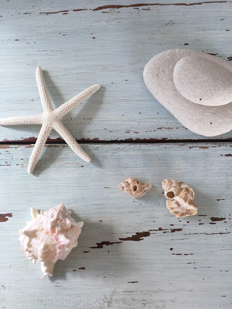 coquillage, etoile de mer